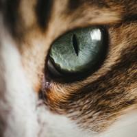 tomcat1581_TP_V4